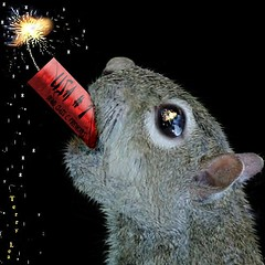 Happy Birthday, USA (Terry_Lea) Tags: squirrel squirrels firecrackers photoshopfun tbas