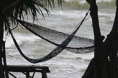 Hammocks in the wind