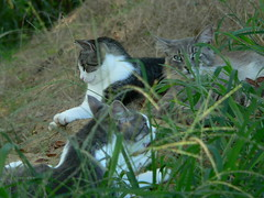 Morning trio - Gerbil, Sally, Chewie, 7/14/06 (robert_rvnwd) Tags: cat gerbil sally chewie