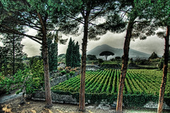 Pompeii Fertile Garden under the Shadow of Vesuvius (Stuck in Customs) Tags: trees italy volcano italia farm pompeii vesuvius hdr lucisart vusuvio