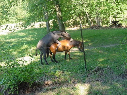 Working on the sex farm! My grandpa's miniature horse and donkey getting it ...