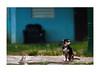 watching the cars go by (Nachosan) Tags: dog bravo bokeh puertorico quality perro caribbean nachosan bokehphotooftheday bokehsoniceaugust bokehsoniceaugust11