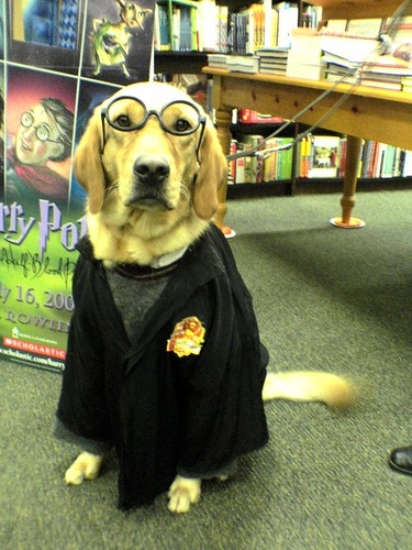 Harry Potter Dog at Barnes and Noble Cumberland