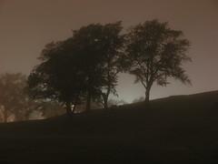 Darklight (Rexton) Tags: light mist canada tree fog night warm novascotia citadel foggy halifax damp drizzle