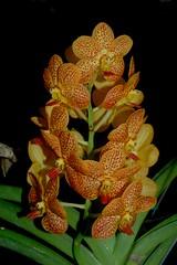 Ah, orchids...