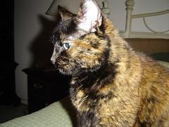 Alert Kitty