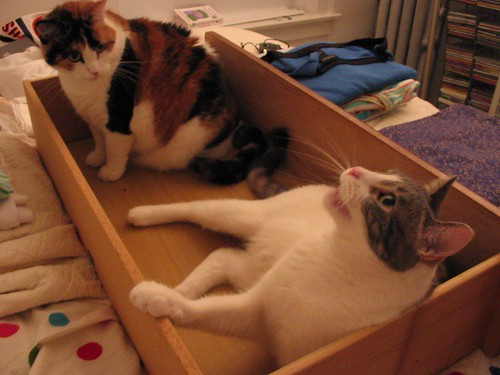 kitty drawer