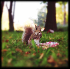 NuttyMcLittle (candersonclick) Tags: chicago fall squirrel peanuts hasselblad humboldtpark