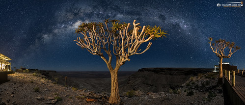 Quiver Trees under starry Sky