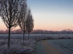 Frosty morning (2) (Teelicht) Tags: braunschweig deutschland dämmerung germany lowersaxony morgendämmerung niedersachsen raureif schunterniederung schuntertal sonnenaufgang volkmarode dawn hoarfrost twilight