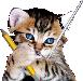 Gatto_logo
