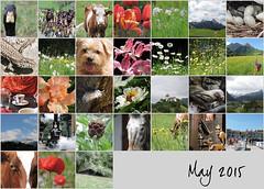 May 2015 mosiac (keepps) Tags: mosaic month bighugelabs