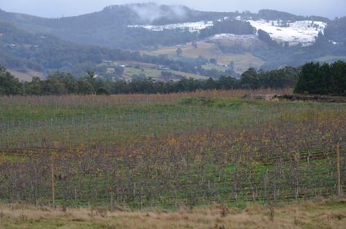 Snow on hills around Huonville rochard o by Apple and Pear Australia Ltd, on Flickr