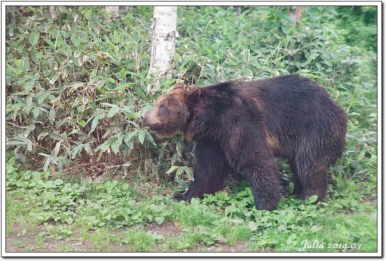 熊牧場 (21)