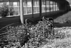 Abandoned Prison #24 (PositiveAboutNegatives) Tags: leica abandoned film closed empty sl prison jail vacant deserted penitentiary foma shutdown leitz correctionalfacility fomapan leicaflexsl 90mmelmarit blackandwhitefilmphotography leicafilmphotography freefilmimages freefilmpictures