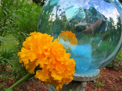 look into  the colorful future (stansvisions) Tags: flowers glass yellow catchycolors fun adifferentpointofview stansvisions