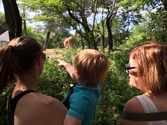 "Paul, Mommy, and Grandma Miller See The Giraffes at Brookfield Zoo • <a style=""font-size:0.8em;"" href=""http://www.flickr.com/photos/109120354@N07/19990529392/"" target=""_blank"">View on Flickr</a>"