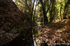 Last days of Autumn (stavros karamanis) Tags: river autumn leafs water reflection tree mountain colours light canonphotography canonusers canon t3i tokina 1116mm f28 dxii ngc landscape landscapephotography troodos cyprus outdoor forest