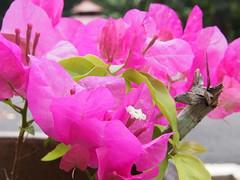 P9040015 (エミ(写真用)) Tags: 花 マレーシア