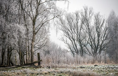 Rübke - Winterlandschaft 1 (Pana53) Tags: photographedbypana53 pana53 naturfoto naturundlandschaftsfotografie naturfotografie jahreszeit wintertime winter winterlandschaft winterlandscape rübke bäume pflanzen natur wiesen felder nikon nikond810 raureif eis frost kälte outdoor