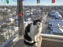 Snow Day (A.Davey) Tags: dot cat rescuecat blackandwhitecat