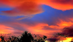 PAINTED SKY (Lani Elliott) Tags: sunset clouds silhouette silhouettes colour color colourful painted beautiful wow