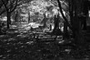 York Cemetery (Johnson Cameraface) Tags: 2016 october autumn olympus omde1 em1 micro43 mzuiko 1240mm f28 johnsoncameraface yorkcemetery york cemetery headstone tomb monochrome blackandwhite spooky gothic