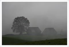 Matin brumeux / Suisse romande (PtiteArvine) Tags: brume brouillard arbre ferme maison matin cantondefribourg romandie suisse campagne automne