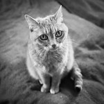 Concerned Cat Is Concerned thumbnail