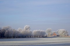 Winter. (elsa11) Tags: winter frost mist frozenfog ijs noordholland explore