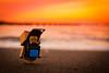 Tateyama city / Canon EOS60D:Canon EF-S60mm F2.8 Macro USM (telenity) Tags: japan tateyama landscape sunsets danboard amazon mini sigma eos60d 日本 館山 ダンボー 北条海岸 アマゾン ミニ 夕暮れ 夕焼け ニャンボー 猫