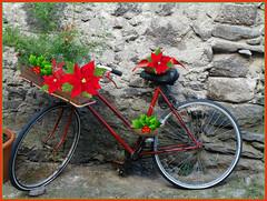 Bici natalizia.. (antonè) Tags: bicicletta rossa fiori natale santulussurgiu sardegna antonè
