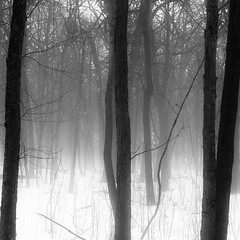 Winter Forest in Fog 005 (noahbw) Tags: d5000 nikon abstract blackwhite blackandwhite branches bw fog foggy forest hellernaturecenter landscape mist misty monochrome natural noahbw quiet silhouette snow square still stillness trees winter woods