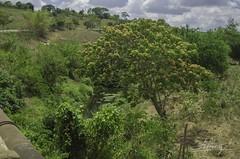 Oasis (warmzera) Tags: oasis paradise brazil nature river water paraíso água rio vegetation vegetação plantas landscape paisagem brasil