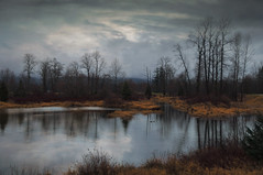 Be Still (charhedman - on and off) Tags: pittlake pittmeadows water reflections trees winter ducks clouds 52weekthemegroup