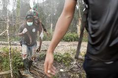 不永續棕櫚油業毀林,造成紅毛猩猩失去棲地 (TEIA - 台灣環境資訊協會) Tags: bumitamaagriltd day deforestation forestscampaigntitle indonesia kwcigpi orangutans outdoors palmoilproduct people plantations rescue southeastasia tropicalrainforests twopeople victims westkalimantan wilmarinternationallimited