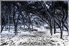 trees (StefaniaDeSantis) Tags: trees canon salento winter snow mysterious