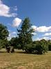 IMG_20150912_154111 (BG_Girl) Tags: софия врана sofia vrana tree дърво дървета trees небе облак облаци sky clouds cloud