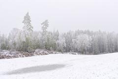 A frozen world - Hølen, Norway (Ingunn Eriksen) Tags: frozen winter winterwonderland winterlandscape hølen vestby norway akershus nikond750 nikon europe