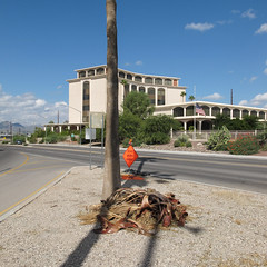 Small pile of autumn leaves. (Tim Kiser) Tags: 2015 20151004 6thstreet 6thandchurch arecaceae arizona arizonalandscape churchavenue courtavenue img4567 october october2015 palmae pimacounty pimacountyarizona sixthstreet sixthandchurch tucson tucsonarizona tucsonlandscape tucsonstreetscape west6thstreet westsixthstreet building downtown downtowntucson droppings fallenleaves gravel intersection landscape mostlysunny ornamentalpalmtree ornamentaltree palm palmdroppings palmleaves palmtree palmwaste paved pavement pile plantdroppings plantmaterial plantmatter smallpile southarizona southeastarizona southeasternarizona southernarizona street streetintersection streetpalm streettree streetscape treetrunk urbanlandscape vegetablematter view yellowstripes unitedstates