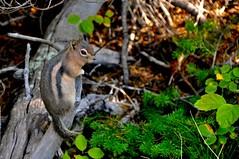 Some wildlife posing for Zaak ;)