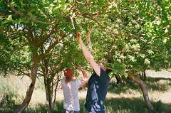 (arthur shuraev) Tags: trip travel tree film june 35mm russia morus 2015  dagestan