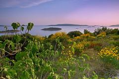 Figa (Renato Bareta photography) Tags: flowers sunset sky clouds landscape colours croatia dalmatia islandčiovo