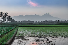 Java-48.jpg (andyfrancombe) Tags: morning mist sunrise indonesia landscape volcano java smoke ricepaddies mountsemeru