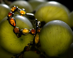 Amber between grapes (www.objetivoimaginario.com) Tags: amber grapes jewels ambar uvas joyas macrofotografia