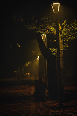 Foggy night in the Park (♫♪♭Enricodot ♫♪♭ In gita fuori porta) Tags: enricodot fog bologna montagnola night evening bench light lights tree street people