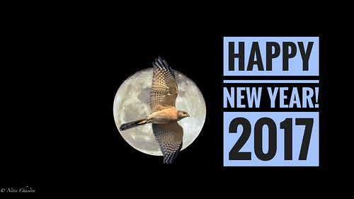 """Happy New Year 2017 All! - """"Explored"""""""