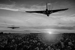 POP0043 (Smart Aviation Art) Tags: poppy poppies poppyfield poppyfields lancaster vulcan avro spitfire hurricane aircraft military bbmf