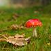 Pilz auf herbstlicher Wiese