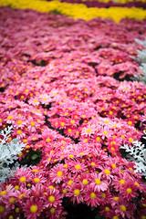 Taiwan-121120-891 (Kelly Cheng) Tags: asia northeastasia taipeiinternationalfloraexposition taiwan day daylight flora flowers nature tourism travel traveldestinations 花博